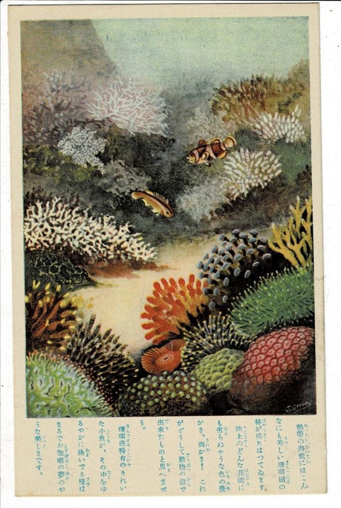 サンゴ礁 少年倶楽部附録