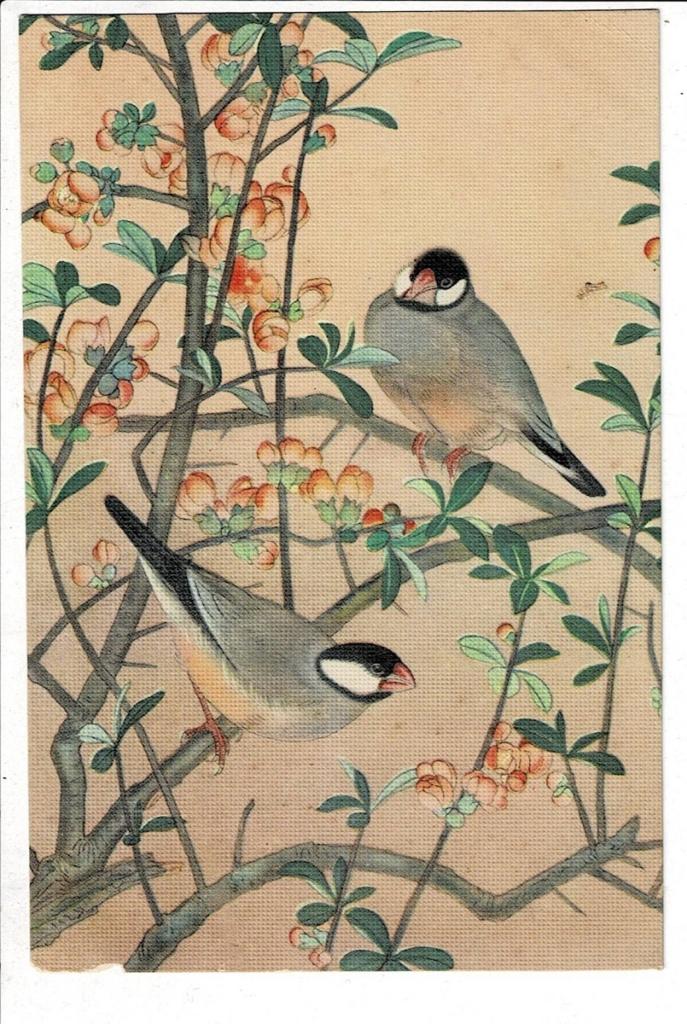 文鳥 少年倶楽部附録 土岡春郊(泉)『鳥類写生図譜』より | るびりん書林