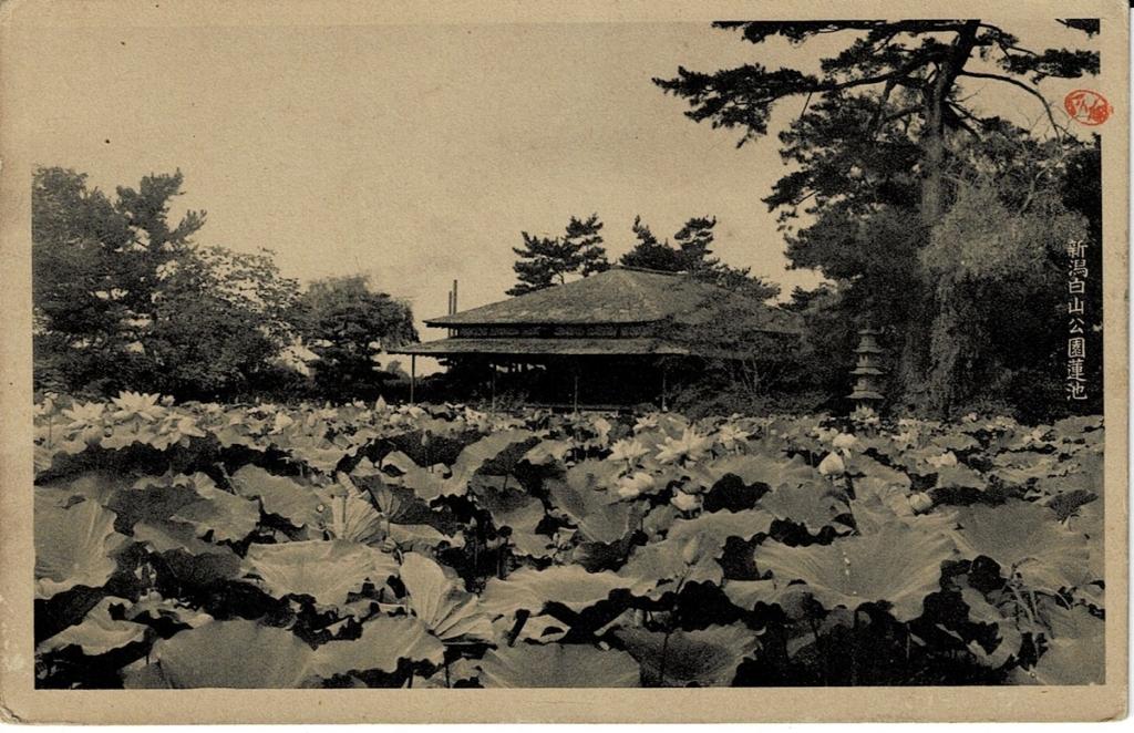 新潟白山公園蓮池