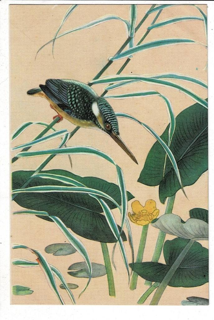 翡翠(カワセミ) 少年倶楽部附録 土岡春郊(泉)『日本鳥類図譜 ...