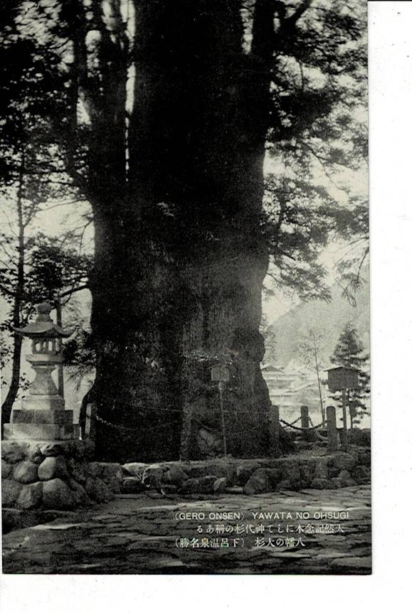 八幡の大杉