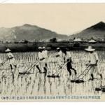 賀茂郡西志和村農業補習学校実習地江原式除草器使用労力調査(第二学年)