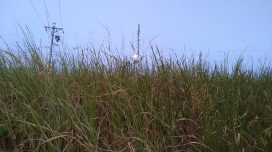 枯れた草と月