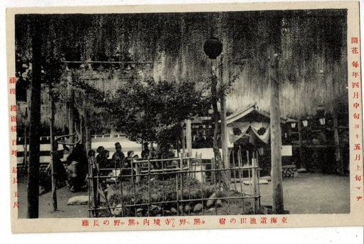 熊野の長藤