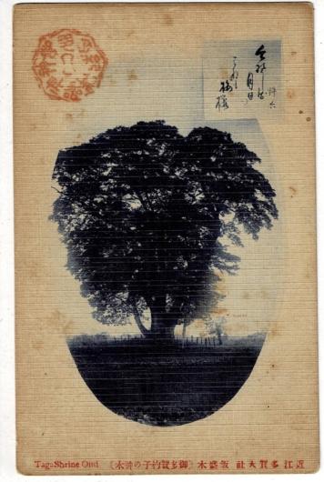 近江多賀神社 飯盛木(御多賀杓子の神木)
