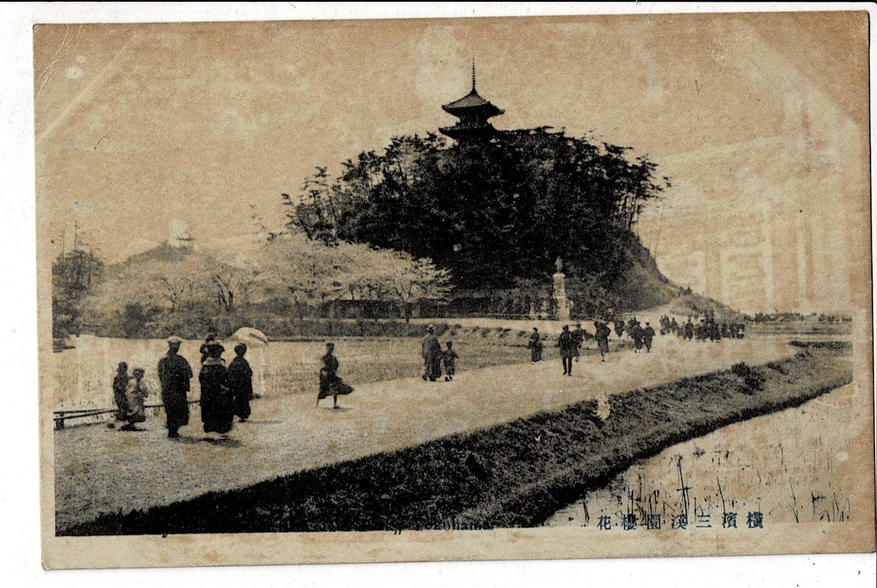 横浜三渓園桜花